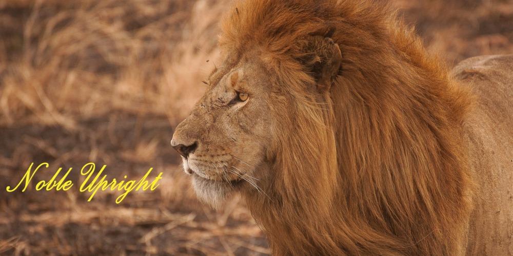 Lion_-5bec81e3220ea0f5f152b75fc053101